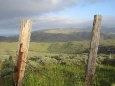 Pastoral vista