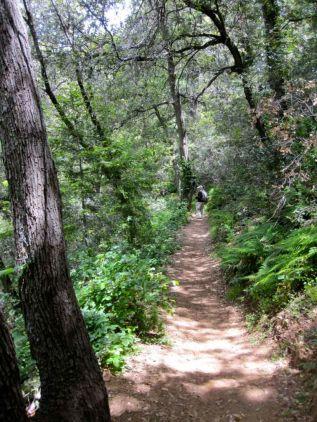 Winter Creek trail