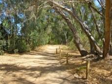 Eucalyptus shade
