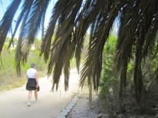 Impressive palms