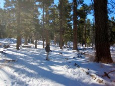 Snowshoeing is like hiking