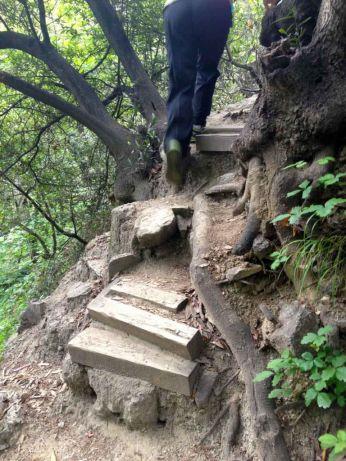 Interesting trail work