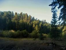 Fish Creek Meadow