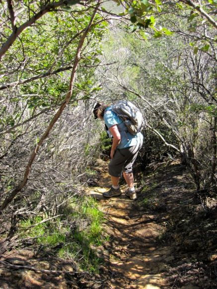 Overgrown trail as you near Blackstar Creek