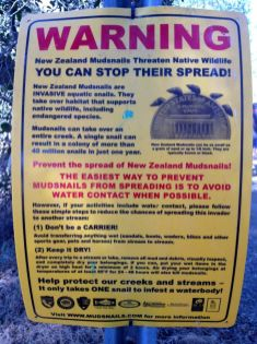 New Zealand Mudsnail Warning