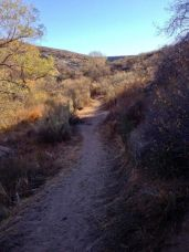 Pacific Crest Trail through the lower canyon