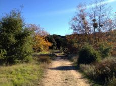 Splashes of fall color in the James Dilley Preserve