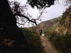 Trail Canyon Trail
