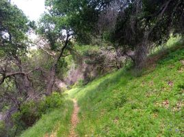 Down the Switchbacks into the Canyon