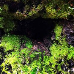 Moss-covered hollowed out log