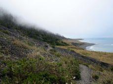 Burn Area on the Lost Coast Trail