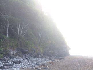 Forest Meets Beach