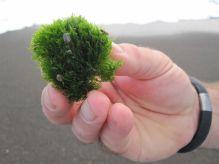 Fuzzy Green Sea-Stuff