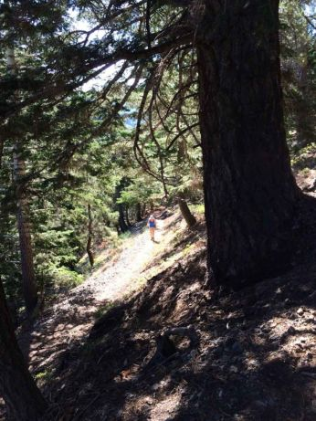 Shady Switchbacks up Baden-Powell