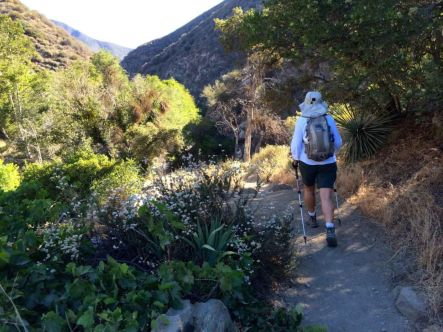 Remarkably Diverse Flora on the East Fork Trail