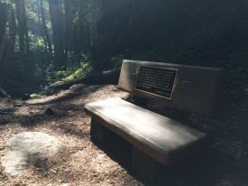 Bench on Limekiln Falls Trail