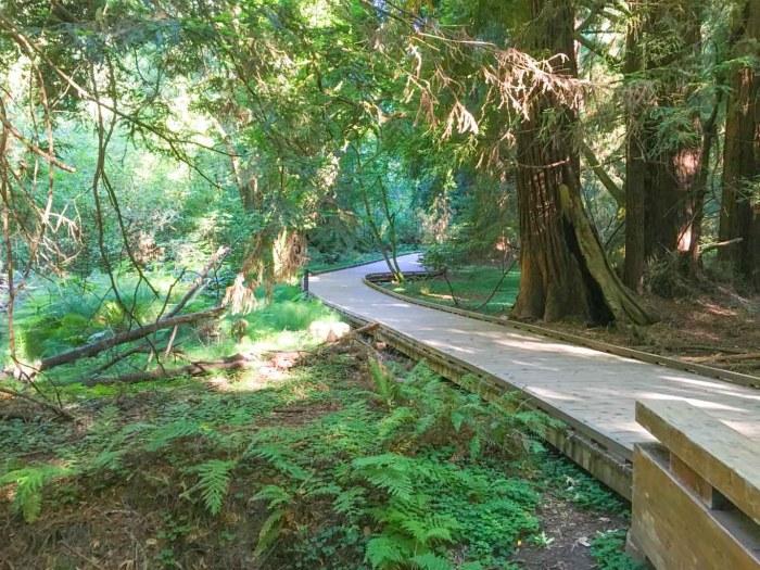Boardwalk in Muir Woods