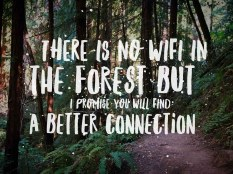 There is no wifi in the forest, but you will find a better connection