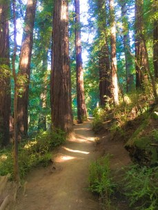 It feels good to connect with the forest in Muir Woods