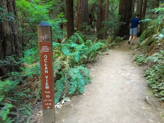 Still on the Canopy View Trail, but some signage calls it the Ocean View Trail