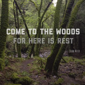 Come to the woods, for here is rest. - John Muir