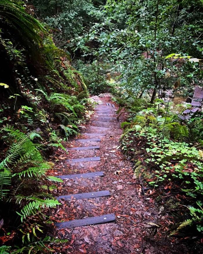 Steps down to the seasonal Kelly Creek crossing