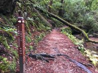 Timms Creek Trail junction