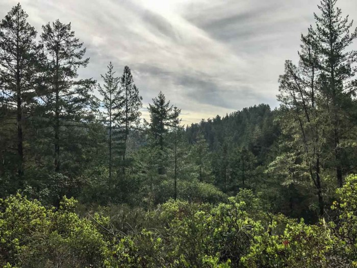 Views above the redwoods on the Sunset Trail