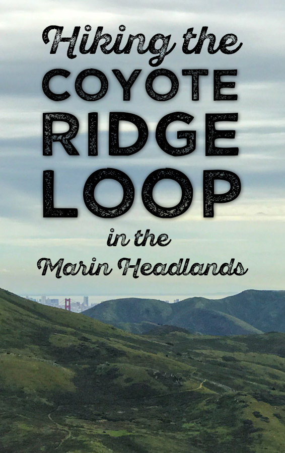 Pin this! Hiking the Coyote Ridge Loop in the Marin Headlands