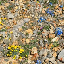 Wildflowers at nearly 14,000 feet