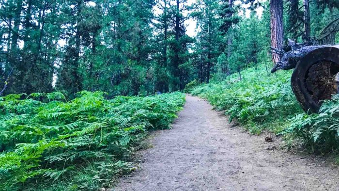 Fern-lined trail to Black Butte