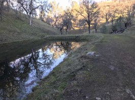 Man-made pond for grazing cattle