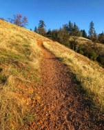Single track in the early morning sunlight