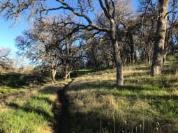 Grassy single-track on Middle Ridge