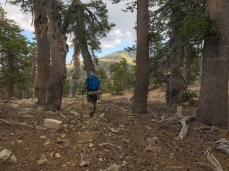 The San Bernardino Divide Trail has some up and down, but is generally pretty gentle.