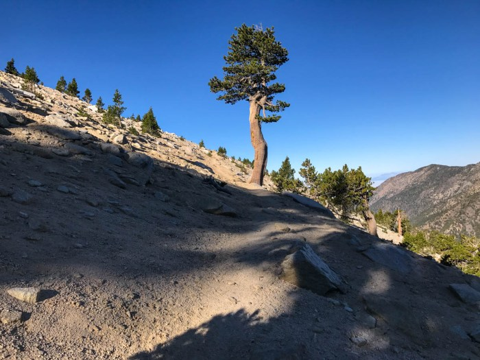 The trail from Dollar Lake Saddle to San Gorgonio has a gentle grade and great views.