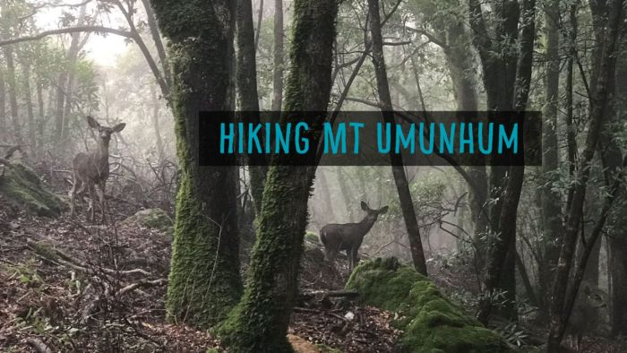 Hiking Mount Umunhum