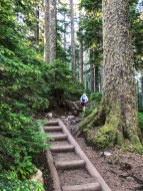 You will climb a series of well-built steps on Mt Pilchuck