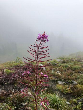 Wildflowers even in September