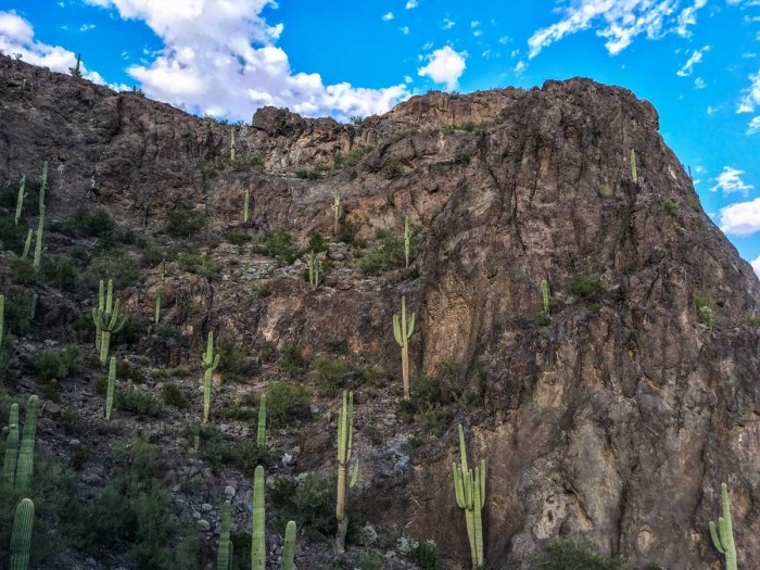 Natural Ampitheater Dotted with Saguaro Cactus on Picacho Peak