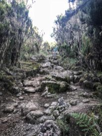 Through the Rain Forest towards Kilimanjaro