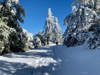 Blue skies and snow on Mt Saint Helena