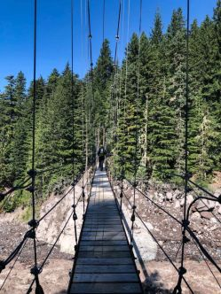 Looking north at the Tahoma Creek Suspension Bridge