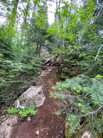 "The ""Trail"" down to Chush Falls"