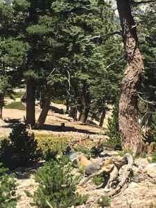Big Horn Peak lives up to its name. D61A9735-063A-4144-B7A1-10A1C051C170A52DB5C2-0C0E-41C9-B4D3-CF6E