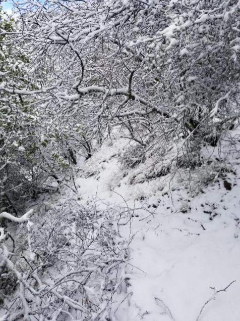 Mitchell-Creek-to-Mt-Diable-Summit-2-10-winter-wonder-land