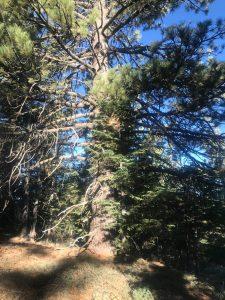 Mount Pinos 86C56A8E-3F0F-450C-AF38-1C2CADEE44428CDA785A-5704-4647-97DF-6BBA325B825DDA1D87D5-0BD6-46