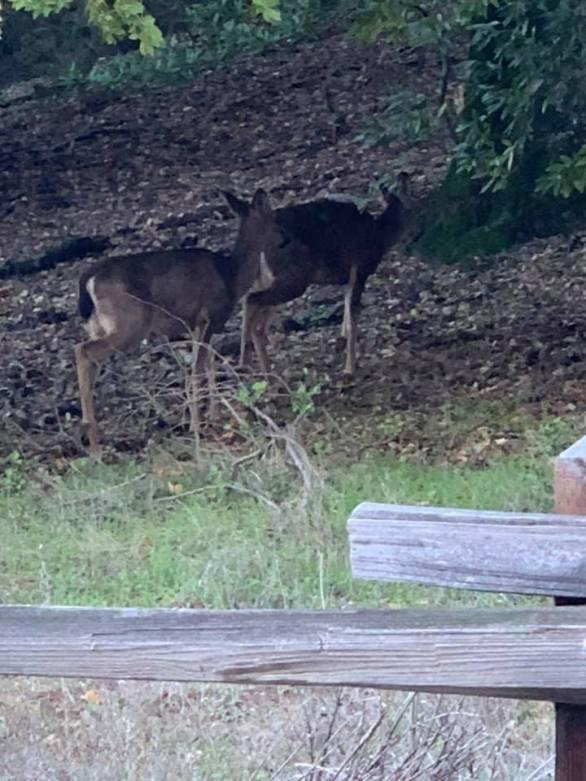 deer-at-mt-um