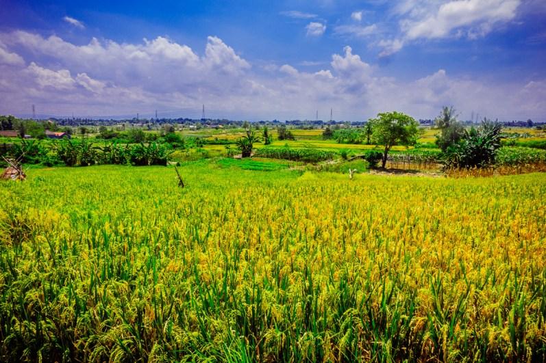 Bali4150417