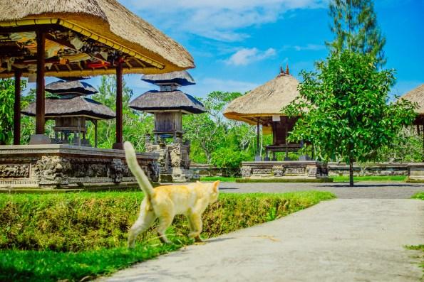 Bali18150417